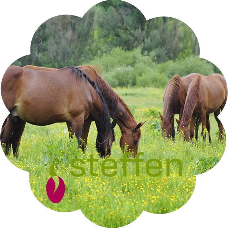 Steffen pâturage chevaux